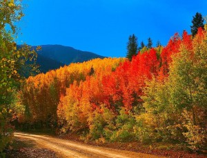 Fall Colors Autumn Road Sky Colorado Trees Backroad Forest Live Wallpapers For Windows 7